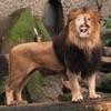 我動物園 (Zoo Me!)