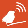 Die Stimmen der Vögel Europas