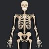 Anatomy Quiz: Human Body Trivia Top Science Guide anatomy quiz