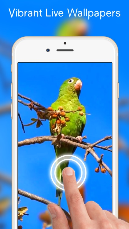 Cute Live Wallpapers Free For Iphone By Samira Alo