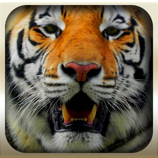 Epic Animal Hunter 3D Simulation 2016 Pro : Wild Jungle iOS App