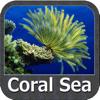 Marine: Coral Sea - GPS Map Navigator