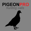 REAL Pigeon Calls and Pigeon Sounds for Hunting! - BLUETOOTH COMPATIBLE