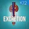 Excretion in Human Beings innovative