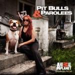 Pit Bulls and Parolees, Season 5