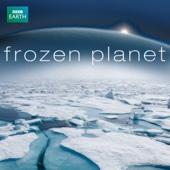 Frozen Planet - Frozen Planet Cover Art